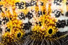 毛虫皮肤结构高放大宏指令 库存照片
