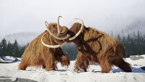 毛象斗牛,在积雪的风景的史前冰河时期哺乳动物 库存图片
