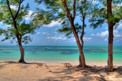毛里求斯 免版税库存图片