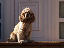 毫华的狗 库存照片