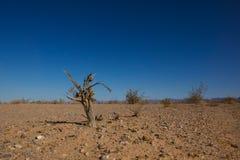 气候变化的作用 库存图片