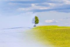 气候变化从冬天到夏时年 免版税库存照片