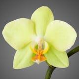 气候特写镜头热带花卉生长的兰花 免版税库存照片