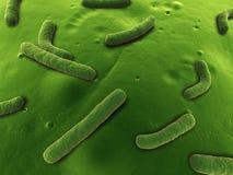 气单孢菌属 皇族释放例证