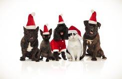 气喘五条逗人喜爱的圣诞老人的猫和的狗坐和 库存图片