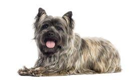 气喘石标的狗的侧视图,被隔绝 库存照片