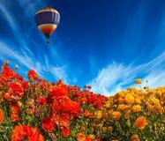 气球飞行在领域 免版税图库摄影