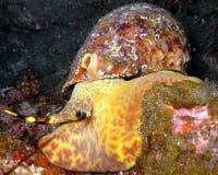 氚核蜗牛拉帕尔马岛加那利群岛 免版税库存图片