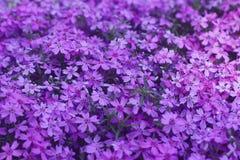 氢核紫色开花现代设计背景 库存图片