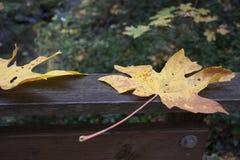 氧化锂公园阿什兰,俄勒冈 免版税图库摄影