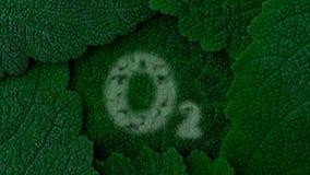 氧气 藏匿O2 背景深绿叶子 关闭4k 股票视频