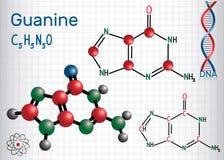 氨基羟尿环G, Gua -嘌呤nucleobase,基本元件 向量例证