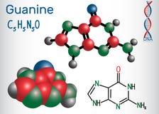 氨基羟尿环G, Gua -嘌呤nucleobase,基本元件 皇族释放例证