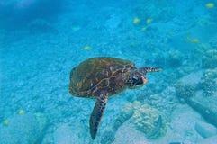 水下场面海运热带的乌龟 免版税图库摄影