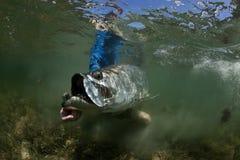 水下大海鲢的版本 免版税库存图片