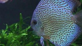 水下异乎寻常的鱼 影视素材