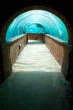 水下水族馆的段落 库存图片