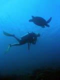 水下潜水员sipadan的乌龟 库存图片