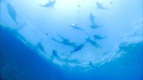 水下潜水埃及鱼红色学校的海运 股票视频