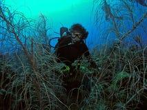 水下潜水女性的水肺 库存照片