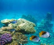 水下珊瑚困难生活的礁石 免版税库存图片