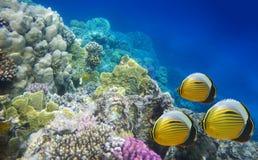 水下珊瑚困难生活的礁石 免版税图库摄影