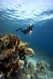 水下珊瑚潜水员礁石的水肺 免版税库存照片