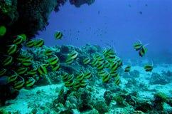水下珊瑚生活的礁石 免版税库存照片