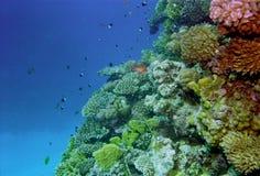 水下珊瑚生活的礁石 库存照片