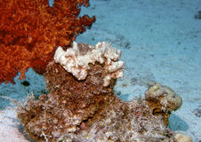 水下珊瑚的功能 库存照片
