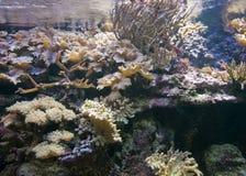 水下珊瑚的风景 免版税图库摄影