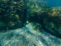 水下的世界在有岩石和海绵的海 免版税库存图片