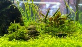 水下的世界水生海杂草野生生物生态系f 库存图片