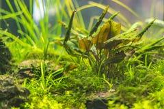 水下的世界水生海杂草野生生物生态系f 库存照片