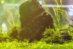 水下的世界水生海杂草野生生物生态系f 免版税库存照片