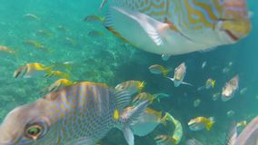 水下的世界滑稽的鱼看照相机 影视素材