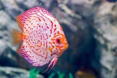 水下的世界的海洋生物,不必须采取 图库摄影