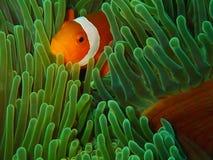 水下的世界秀丽在沙巴,婆罗洲的 免版税库存图片