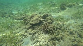 水下的世界,海洋,海, 股票录像