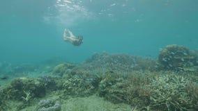 水下的在珊瑚礁的看法热带鱼和年轻女人游泳在海 潜航在风镜和观看的女孩 股票录像