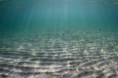 水下的场面 免版税图库摄影