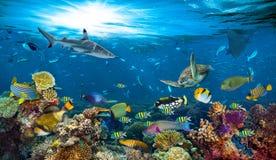 水下的天堂珊瑚礁五颜六色的鱼背景 库存照片