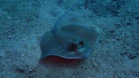 水下的安达曼海 免版税库存图片