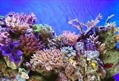 水下的寿命 图库摄影