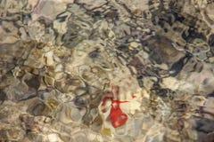 五颜六色的水下的生活 水下的抽象纹理 库存照片
