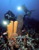 水下的摄影师 库存图片