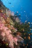 水下的斐济 免版税图库摄影