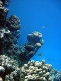 水下的横向 免版税库存图片