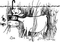 水下的母牛 库存照片