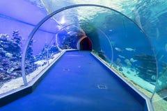 水下的水族馆 库存图片